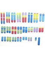 Chromosomes 3-D Model Making Kit