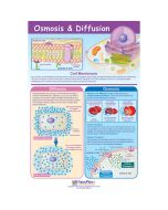 Osmosis & Diffusion Poster, Laminated