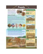 Fossils Poster, Laminated