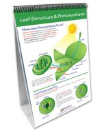 Photosynthesis and Cellular Respiration Curriculum Mastery® Flip Chart Set