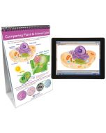 All About Cells Curriculum Mastery® Flip Chart Set With MULTIMEDIA Lesson