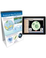 Protists: Pond Microlife Curriculum Mastery® Flip Chart Set With MULTIMEDIA Lesson