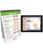 Meiosis Curriculum Mastery® Flip Chart Set With MULTIMEDIA Lesson
