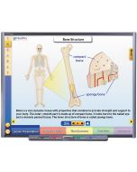 Systems of the Human Body I: Moving & Controlling the Body Multimedia Lesson - CD Version