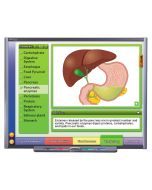 Systems of the Human Body II: Providing Fuel & Protection Multimedia Lesson - Downloadable Version
