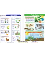 Food Chains Visual Learning Guide