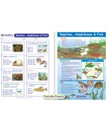 Reptiles, Amphibians & Fish Visual Learning Guide
