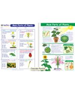 Main Parts of Plants Visual Learning Guide
