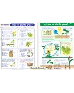 How Do Plants Grow? Visual Learning Guide