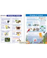 Grouping of Animals Visual Learning Guide