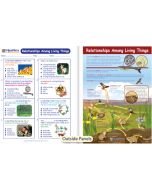 Relationships Among Living Things Visual Learning Guide