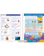 Invertebrates - Animals without Backbones Visual Learning Guide