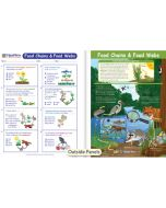 Food Chains & Food Webs Visual Learning Guide