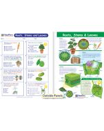 Roots, Stems & Leaves Visual Learning Guide