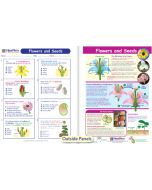 Flowers & Seeds Visual Learning Guide