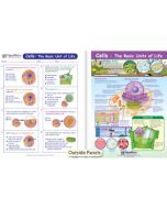 Cells - The Basic Units of Life Visual Learning Guide