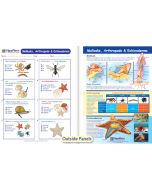 Mollusks, Arthropods & Echinoderms Visual Learning Guide