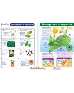Photosynthesis & Respiration Visual Learning Guide