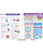 Osmosis & Diffusion Visual Learning Guide