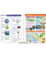 Microlife - Bacteria, Fungi & Protists Visual Learning Guide