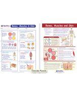 Bones, Muscles & Skin Visual Learning Guide
