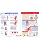 The Circulatory System Visual Learning Guide