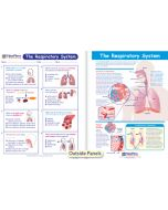 The Respiratory System Visual Learning Guide