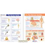 The Nervous System Visual Learning Guide