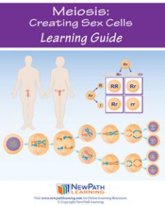Meiosis: Creating Sex Cells Student Learning Guide - Grades 6 - 10 - Print Version - Set of 10