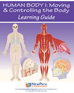 Human Body 1: Moving & Controlling the Body Student Learning Guide - Grades 6 - 10 - Downloadable eBook