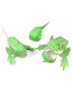 Frog Life Cycle 3-D Model Making Kit