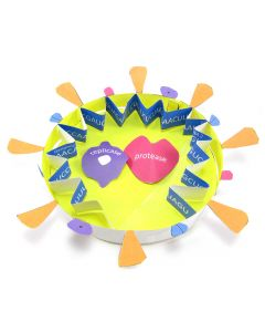 Coronavirus (COVID-19) Structure 3-D Model Making Kit