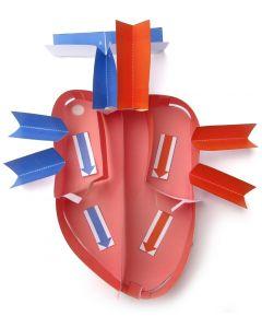 Human Heart 3-D Model Making Kit