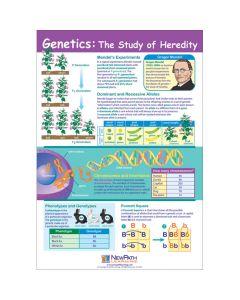 Genetics: The Study of Heredity Poster, Laminated