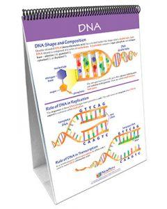 Chromosomes, Genes & DNA Curriculum Mastery® Flip Chart Set