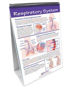 Human Body II: Providing Fuel and Transportation Curriculum Mastery® Flip Chart Set