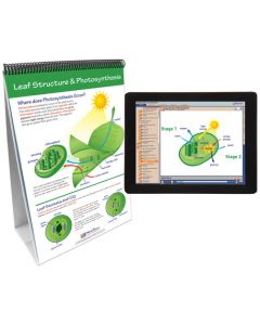 Photosynthesis and Cellular Respiration Curriculum Mastery® Flip Chart Set With MULTIMEDIA Lesson