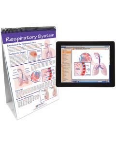 Human Body II: Providing Fuel and Transportation Curriculum Mastery® Flip Chart Set With MULTIMEDIA Lesson