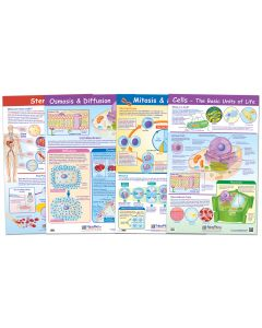 "Cell Structure and Processes Poster Set of 4 - Laminated - 23"" x  35"""