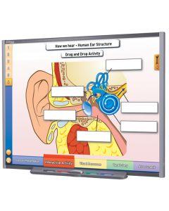 Sound Multimedia Lesson - Downloadable Version
