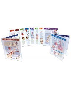 Human Body - Grades 6 - 10 Visual Learning Guides™ Set