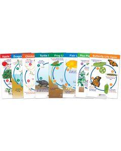 Life Cycles Bulletin Board Chart Set of 8, Gr. 1-3