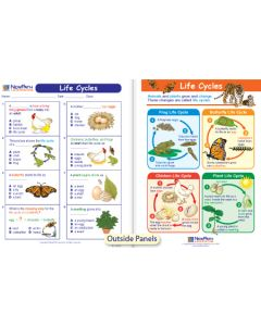 Life Cycles Visual Learning Guide