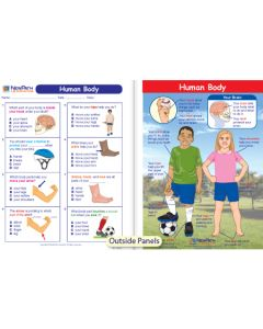 Human Body Visual Learning Guide