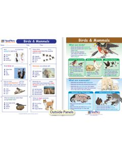 Birds & Mammals Visual Learning Guide