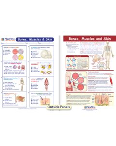 Bones, Muscles & Skin Visual Learning Guide