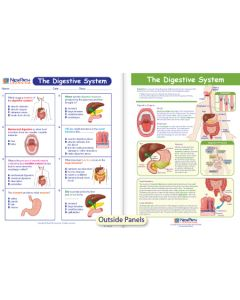 The Digestive System Visual Learning Guide