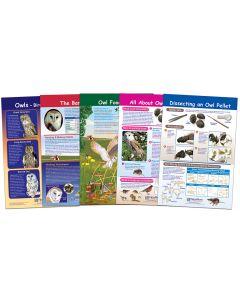Owl and Owl Pellets Bulletin Board Chart Set
