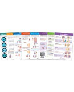 Meiosis Bulletin Board Chart Set of 8