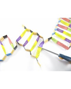 Gene Cloning 3-D Model Making Kit
